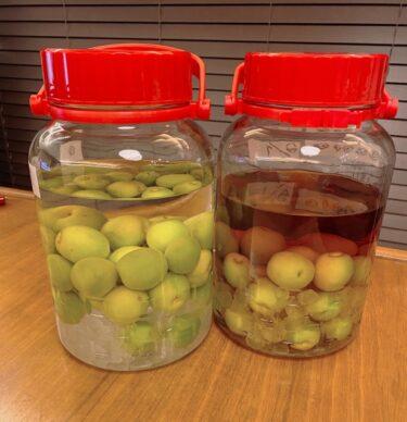 梅ジュースで食中毒?シロップに白いカビ?腐る原因と保存期間や賞味期限、保存方法について